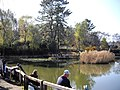 白幡池公園 - panoramio.jpg