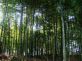 麻拐山 - panoramio - 曹松意 (53).jpg
