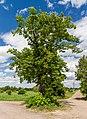 009 2015 05 06 Winterlinde (Wiki Loves Earth 2015).jpg