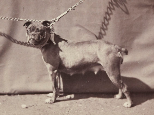 02. Old English Bulldog, 1863. Paris, France. 2