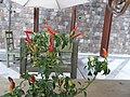 1- a Chili peppers, Author David Adam Kess, Photography by David Adam Kess, pic.bbb.jpg