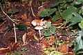 12-10-21 Dreieich Pilze 40.jpg