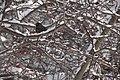 13-02-09 Nemo Snowstorm (Unedited) (90) (8466154853).jpg