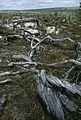 16001000427537-Västerbotten-Riksantikvarieämbetet.jpg