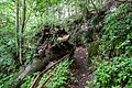 170710-6Wanderweg im Naturschutzgebiet.jpg