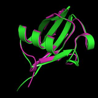 Ubiquitin-like protein InterPro Domain