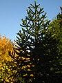 2011-10-31-155157 .JPG - panoramio.jpg