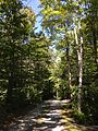 2013-08-25 12 07 00 View north near 5 Lake Road at Spring Lake in Berlin, New York.jpg