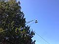 2014-10-30 11 30 53 Old street lamp on Fireside Avenue in Ewing, New Jersey.JPG