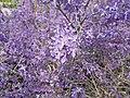 2015.04.09 14.51.29 DSCN2247 - Flickr - andrey zharkikh.jpg