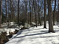 2016-01-31 14 03 43 A tributary of Hosepen Run and a snow-covered trail in a snowy woodland eight days after the Blizzard of 2016 in the Franklin Farm section of Oak Hill, Fairfax County, Virginia.jpg