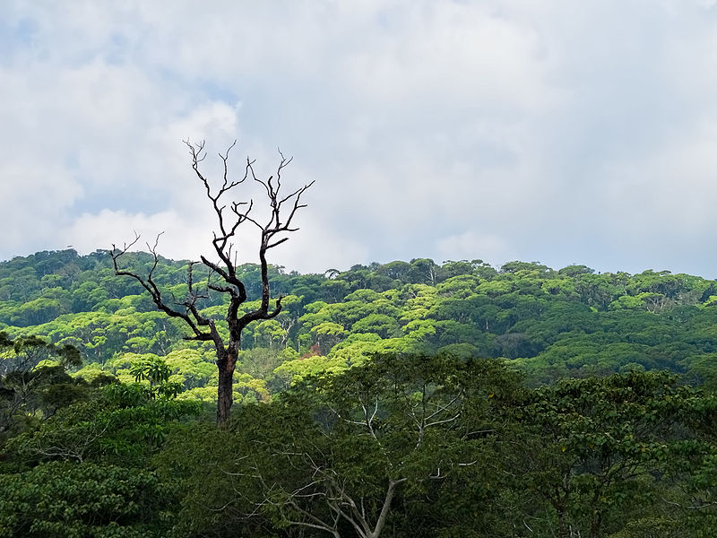 File:20160128 Sri Lanka 4107 Sinharaja Forest Reserve sRGB (25468886730).jpg