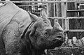 2016 - October Zoo Visit (30044649934).jpg