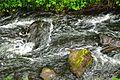 20170610 stroomversnelling Borkener paradies.jpg