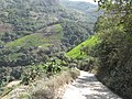 258 - this is Yungas.jpg