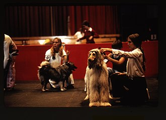 Oregon State Fair - Image: 4 H participants showing dogs at the State Fair, circa 1975 (5858448308)