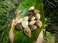 4022Common houseflies cats ants plants foods of Bulacan 13.jpg