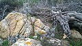 83230 Bormes-les-Mimosas, France - panoramio (382).jpg