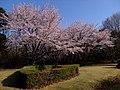 AIST Sakura - panoramio (2).jpg
