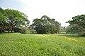 AJC Bose Indian Botanic Garden - Howrah 2018-04-01 2350.JPG