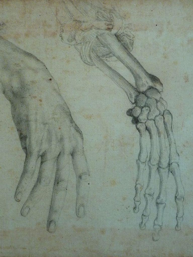 Fileallori Alessandro Trois Etudes Anatomiques Dune Main