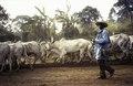 ASC Leiden - van Achterberg Collection - 1 - 085 - Un berger Mbororo avec des zébus - Bamenda, Cameroun - 6-12 février 1997.tif