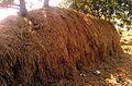 A Haystack near Hamsavaram Village.jpg