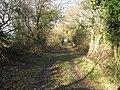 A Woodland Track. - geograph.org.uk - 628902.jpg
