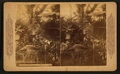 A hot house scene in California, from Robert N. Dennis collection of stereoscopic views.png