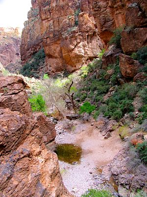 Tonto National Forest - A pool of water, a remnant of the last rains, in a dry wash in Tonto National Forest