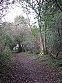 A shady path - geograph.org.uk - 1029719.jpg