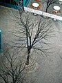 A tree from above (274293043).jpg