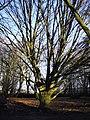Aboretum Heempark - Delft - 2009 - panoramio - StevenL (2).jpg