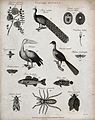 Above, two perches, two insects and a hairy spider. Engravin Wellcome V0020673ER.jpg