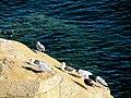 Acadia National Park (8111101593).jpg