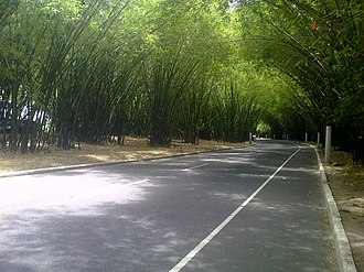 Deputado Luís Eduardo Magalhães International Airport - Bamboo Mainroad