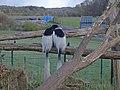 Affen geniessen die Aussicht auf die A30 (40359898211).jpg