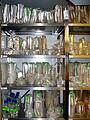 Agar plates in coldroom MPI-CBG.jpg