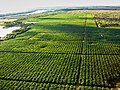 Agricultura irrigada no vale do são francisco bahia e pernambuco.jpg