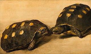 Étude de deux tortues brésiliens