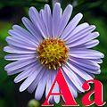 Alfabet roślin - literka A.jpg