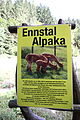 Alpaka-niederöblarn0030.JPG