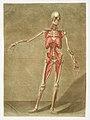 Anatomical illustration by Arnauld-Eloi Gautier-Dagoty , digitally enhanced by rawpixel-com 6.jpg