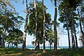 Andaman Islands, Neil, Trees by the beach.jpg