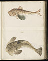 Animal drawings collected by Felix Platter, p1 - (59).jpg