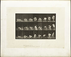 Animal locomotion. Plate 268 (Boston Public Library).jpg