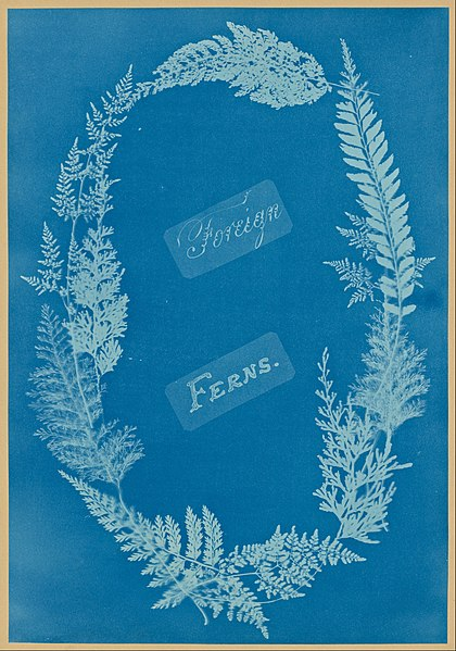 File:Anna Atkins - Foreign Ferns - Google Art Project.jpg