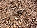 Ants CBMen 2.JPG