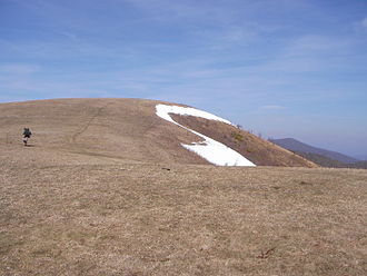 Max Patch - Max Patch Bald