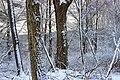 April Snow (3) (26245822632).jpg
